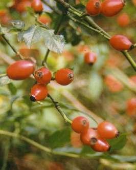 Les fruits - Poil a gratter plante ...
